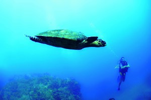 tsarabanjina-madagascar-diving-turtle-1 copia