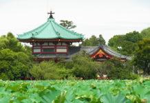 Ueno Park (Shinobazu Pond)